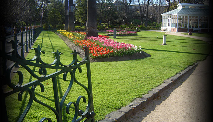 Photo of park and spring tulips in bloom, Bendigo